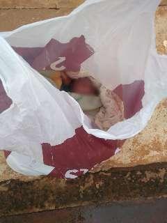 Bebê recém-nascido é achado dentro de sacola