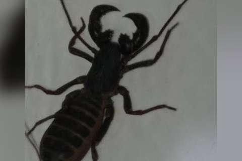 Infestação de todo tipo de escorpião põe medo na Nova Campo Grande
