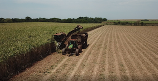 Maquinário faz a colheita de cana-de-açúcar, matéria-prima do etanol (Foto: Divulgação)