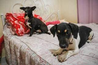 Dois dos quatro cachorros no quarto da paciente. (Foto: Henrique Kawaminami)