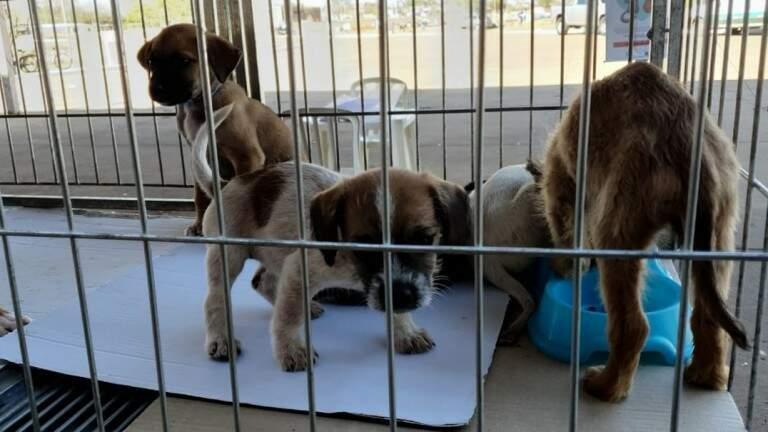 Filhotes, cães esperam pelo futuro dono em gaiola no CCZ (Foto: Divulgação)
