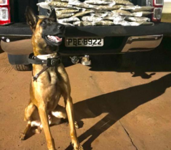 Cão policial pousa para foto após encontrar quase dez quilos de maconha em mala (Foto: divulgação/PM)
