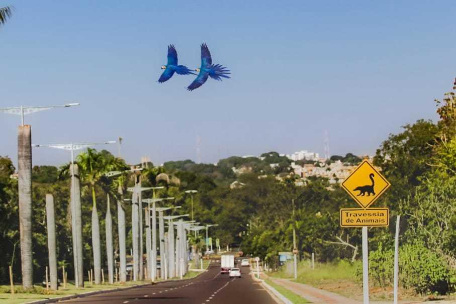 Araras a cruzarem os céus já virou cena turística da Capital (Foto: Marcos Maluf)