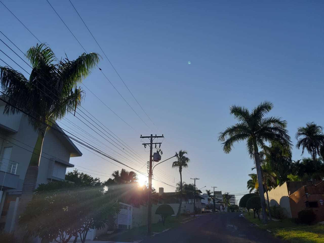 Na região do bairro, palmeiras não faltam – são as residências de cada família de araras (Foto: Raul Delvizio)