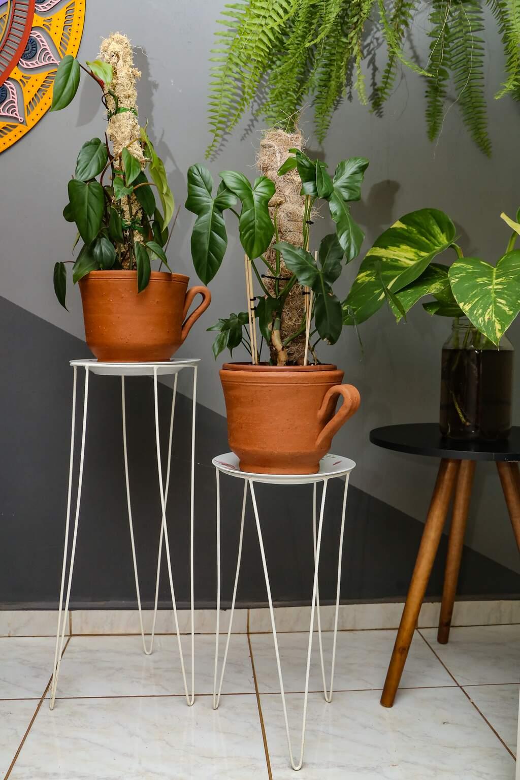 Com muitas plantas pela casa, maioria é da família araceae. (Foto: Kísie Ainoã)