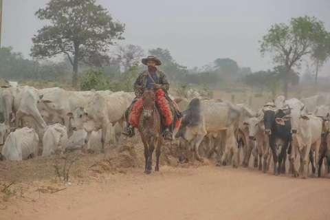 """Com frigoríficos """"parados"""", produtores de MS querem importar gado paraguaio"""
