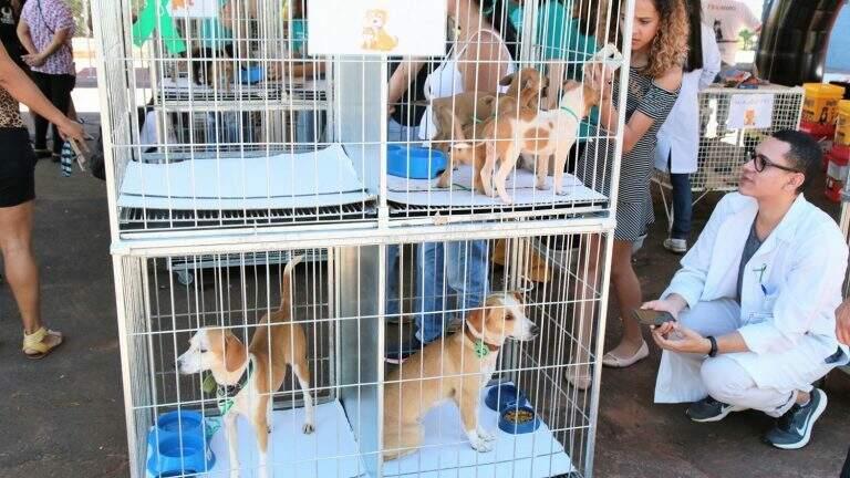 Feira de adoção em janeiro, no Centro de Controle de Zoonoses. (Foto: Prefeitura de Campo Grande)