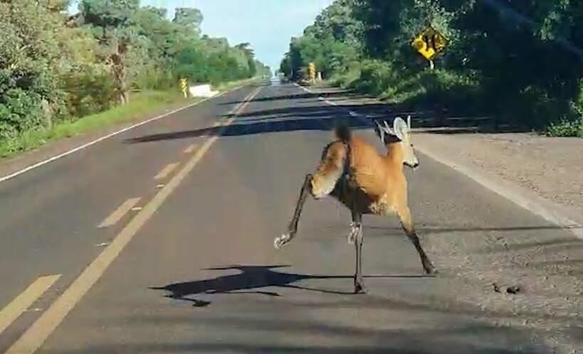 Animal correndo em meio à pista (Reprodução)
