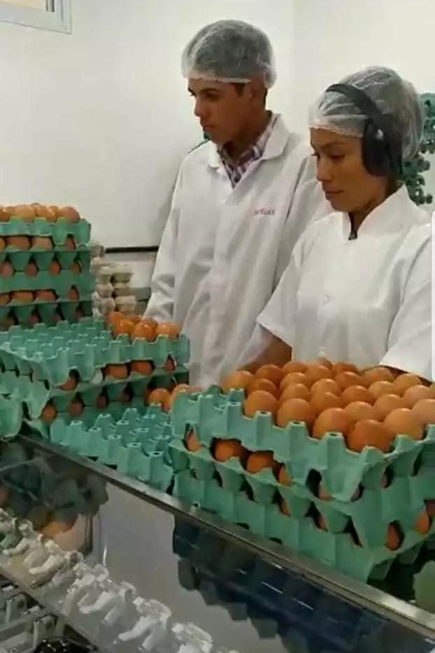 Funcionários da granja Ovos Pocó realizando o processo de embalagem dos ovos. (Foto: Arquivo pessoal)