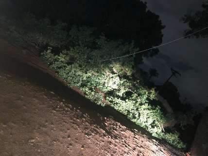 Árvore cai, derruba três postes e deixa moradores sem energia no Rita Vieira