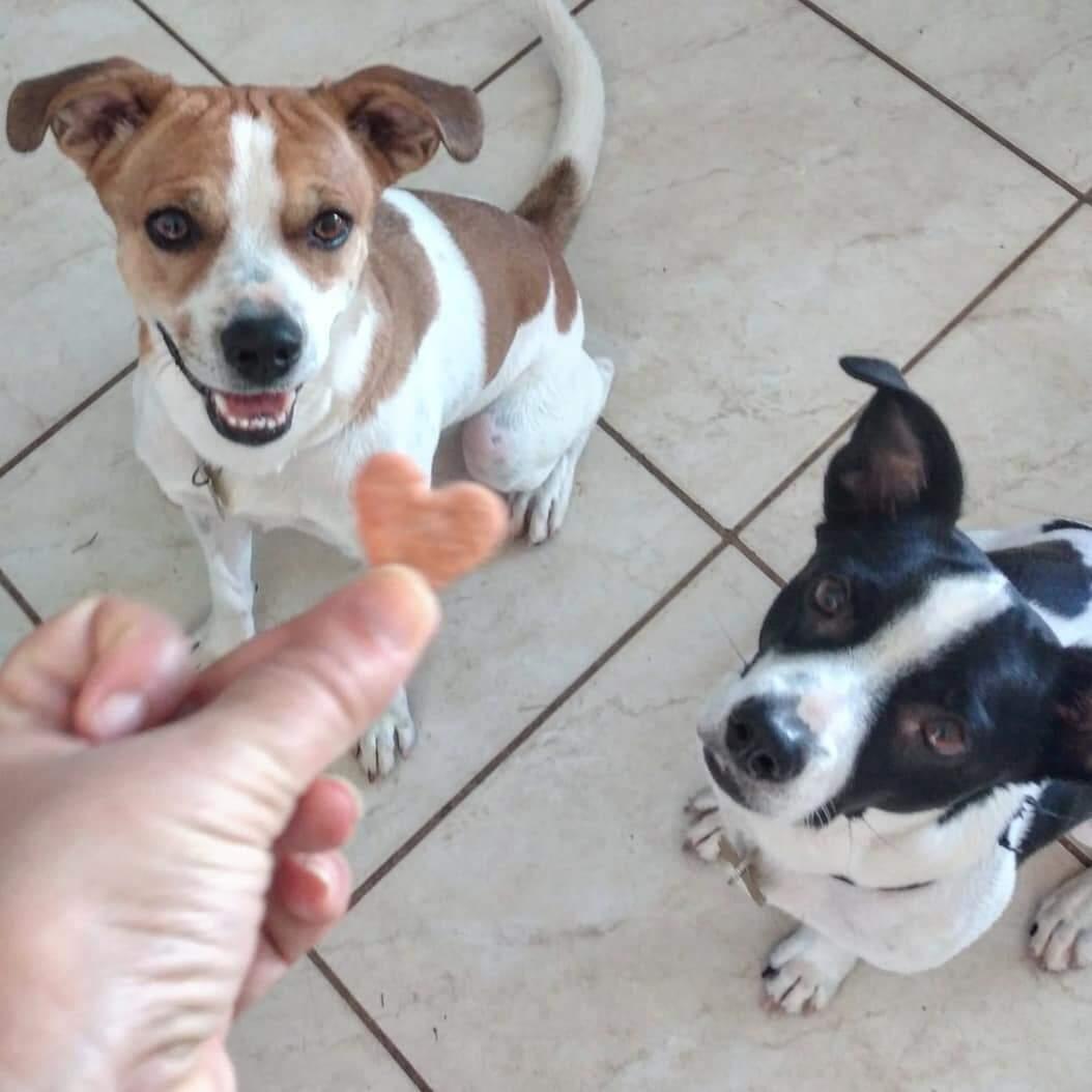 Petiscos naturais ajudam não só na nutrição, como também no adestramento animal (Foto: Arquivo Pessoal)
