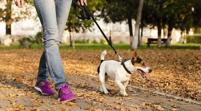 Antes da pandemia, tinha gente que nem saía com o próprio cachorro; agora, hobby é diário (Foto: Reprodução)
