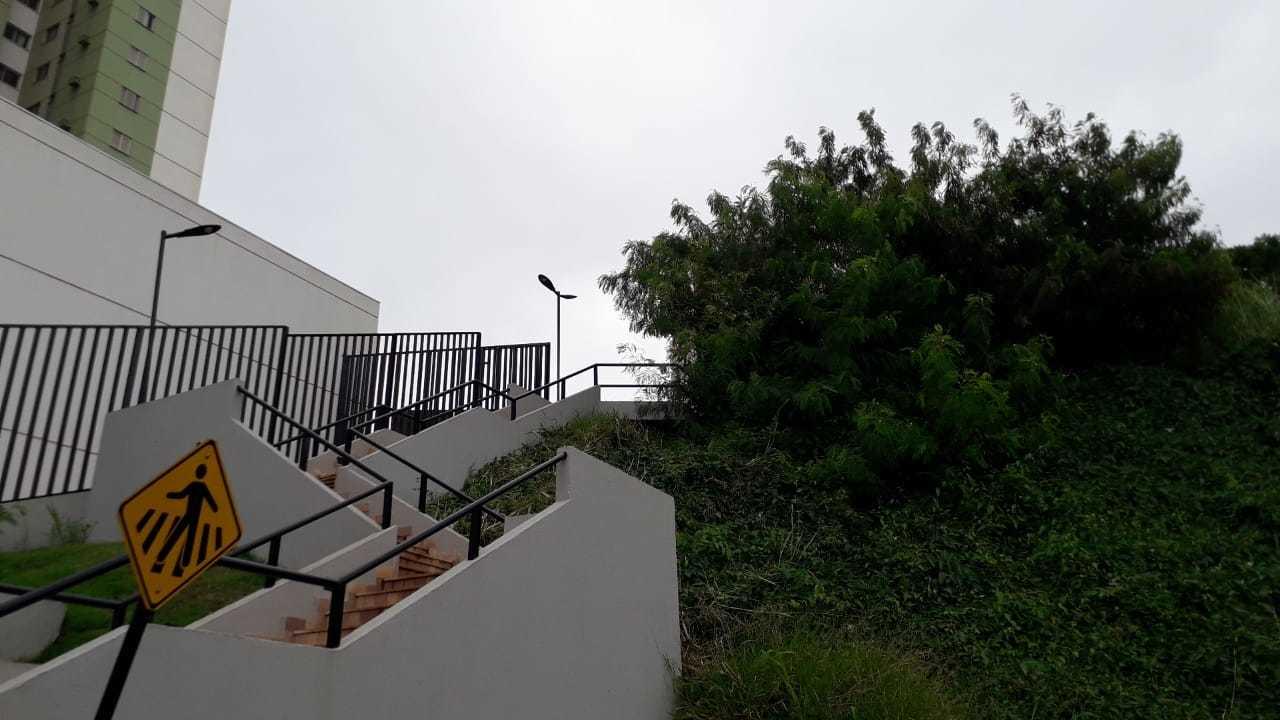 O animal está escondido perto da escada que dá acesso ao shopping. (Foto: Direto das Ruas)