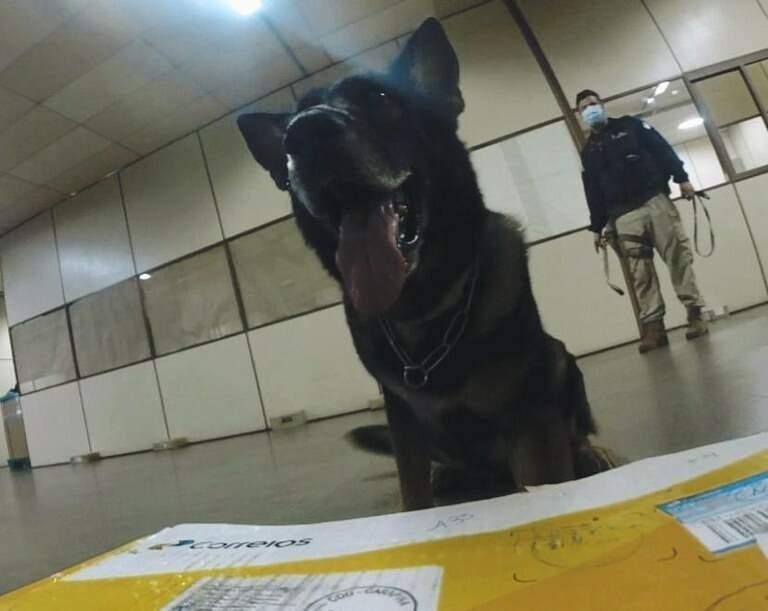 Um dos cães que atuaram na busca pelas drogas. (Foto: PRF)