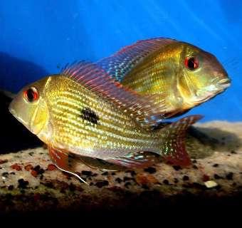 Peixes começam a povoar tanques do Aquário do Pantanal