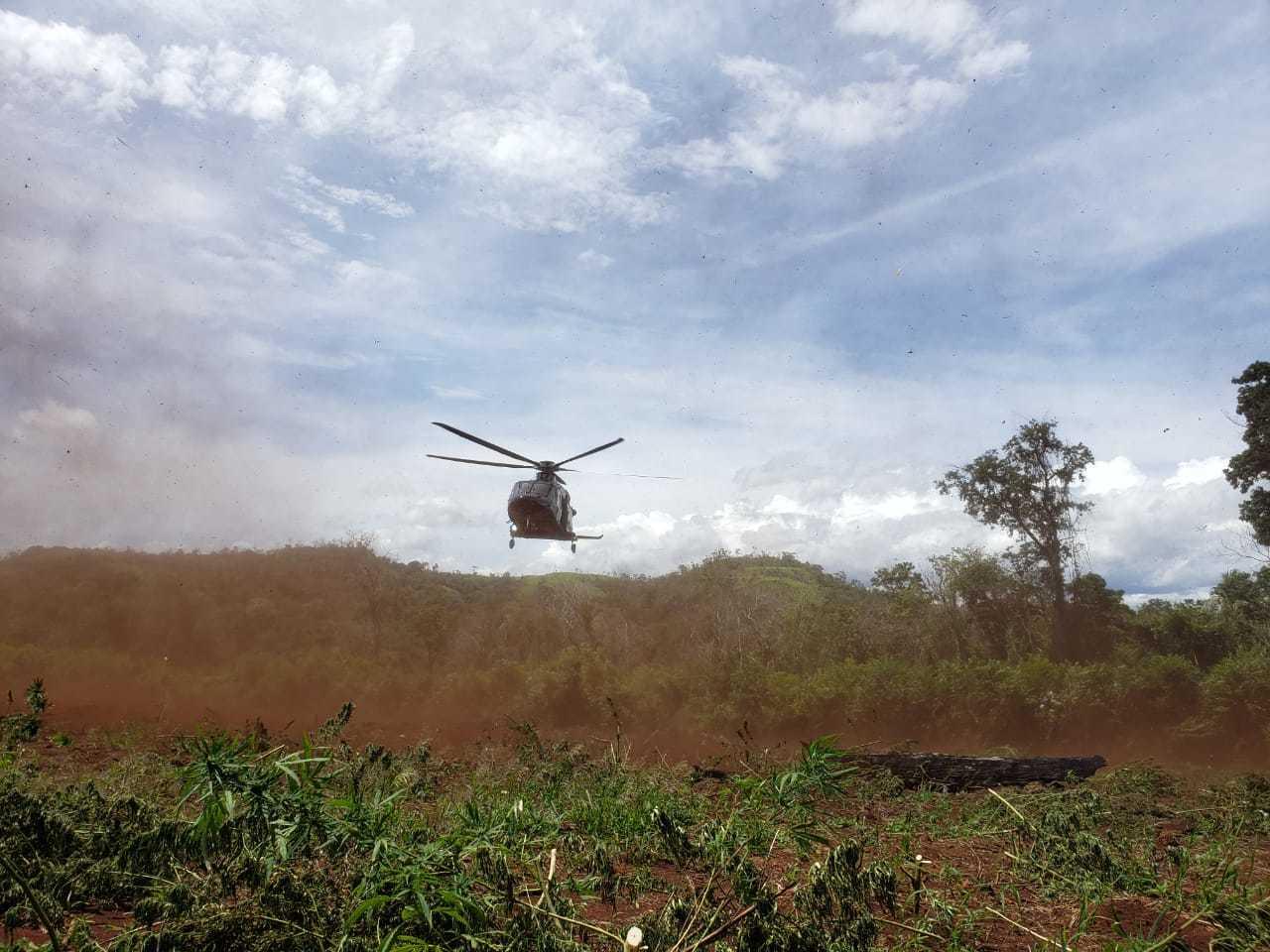 Helicóptero da PF brasileira pousa em área de cultivo de maconha (Foto: Divulgação/Senad)