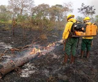 Brigadas combatem incêndio no Pantanal, na região de Aquidauana (Foto: Divulgação-Previfogo)