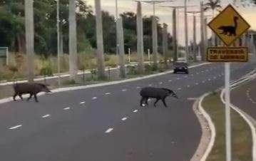 """Antas """"desfilam"""" por avenida a caminho do Parque dos Poderes"""