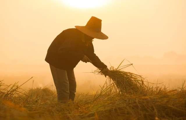 Aposentadoria rural por idade: saiba como funciona