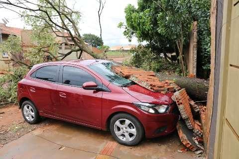 Dona de carro filma momento em que árvore cai sobre veículo durante chuva forte