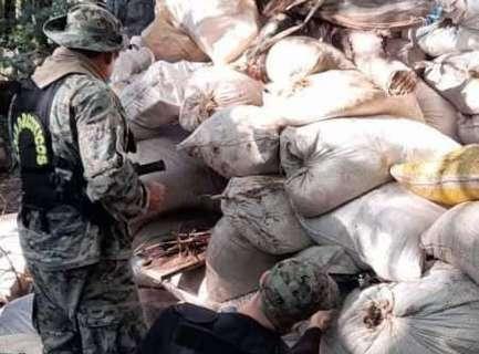 Polícia destrói 13 toneladas de maconha em acampamento narco na fronteira