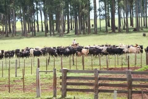 MS ganha delegacia especializada em furto e roubo de gado