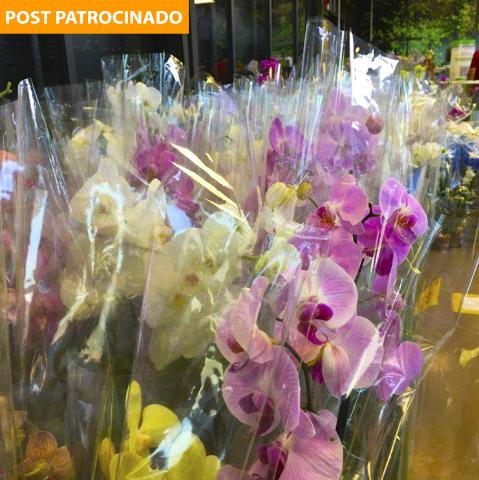 Semana das Mães na Leroy Merlin tem orquídeas de Holambra a partir de R$ 24,90