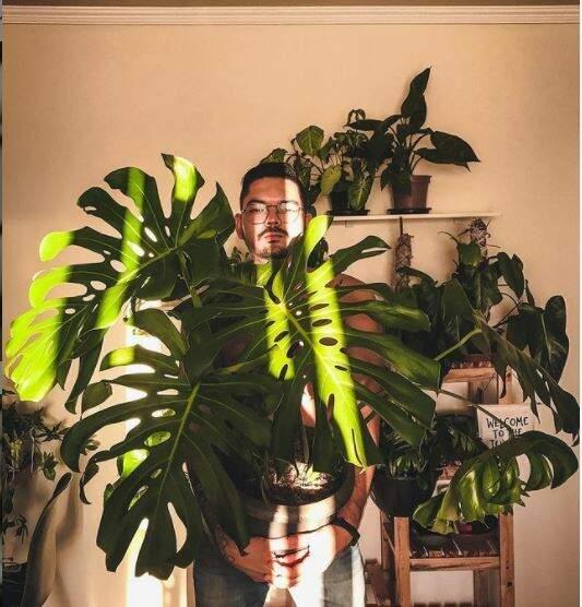 Marcelo, que já contou um pouco da história de seu apê cheio de plantas, também mantém sua costela-de-adão em casa. (Foto: @Jungleb303)