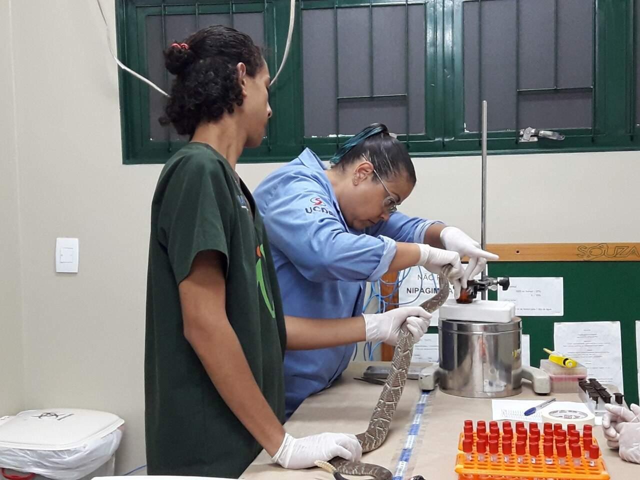 Biotério trabalha com animais para pesquisa. (Foto: Assessoria de Comunicação UCDB)