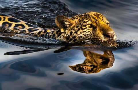 Artistas doam obras para arrecadar R$ 2 milhões para recuperar Pantanal