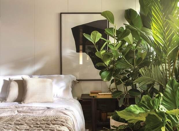 Se você tem boa iluminação, quarto pode ser um ambiente ideal para diferentes espécies de plantas. (Foto: Felipe Araujo)