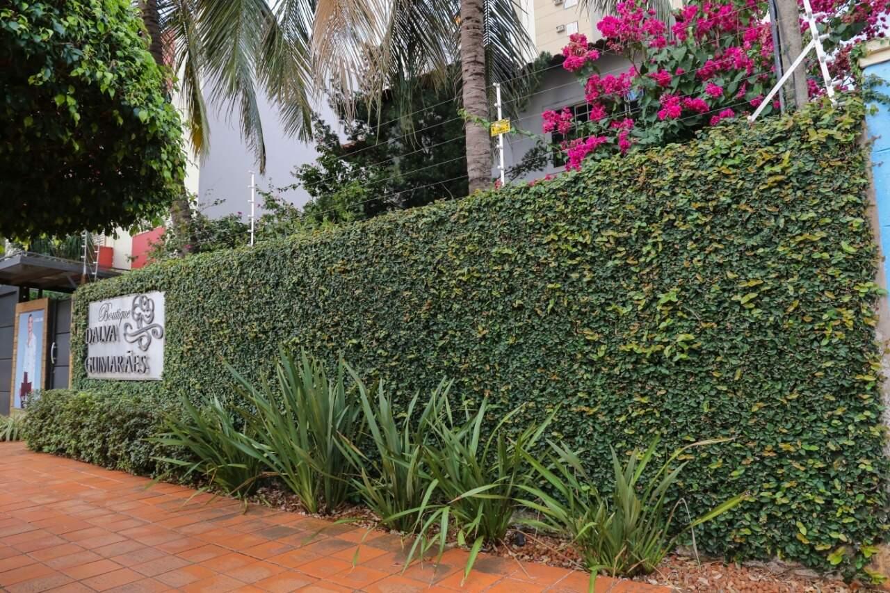 Muro verde com a hera unha de gato. (Foto: Paulo Francis)