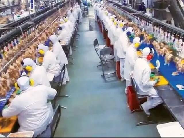 Linha de produção da indústria de alimentos mantida pela BRF em Dourados (Foto: Divulgação/Arquivo)