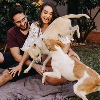 Cães aprontam em ensaio e garantem fotos hilárias com grávida