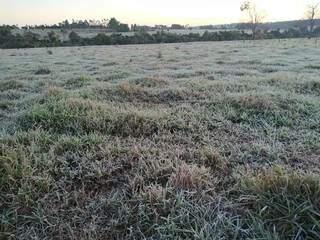 Em propriedade rural de Vicentina, o pastou congelou (Foto: Direto das Ruas)