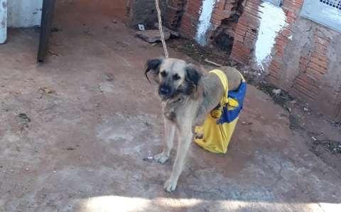 Dona de 3 cães deixados amarrados, sem comida e no frio passa a noite na cadeia