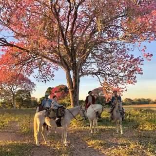 Em mais uma visita, diretor de 'Pantanal' mostra encanto com ipês