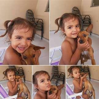 Após pet shop perder Nina, família procura por cão há 5 dias e oferece R$ 1 mil