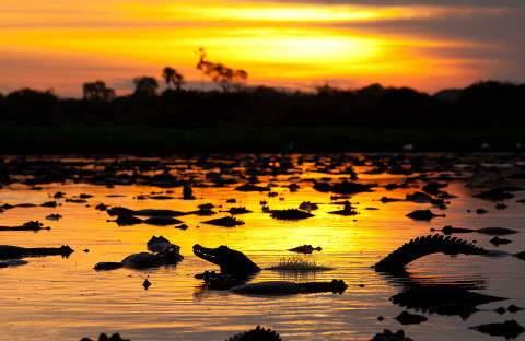 Pró-Pantanal terá R$ 30 milhões para evitar tragédia igual de 2020 no bioma
