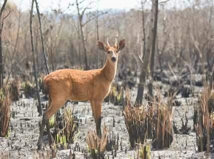 """""""Ilhas"""" de vegetação garantem resistência e fauna ativa em áreas queimadas"""