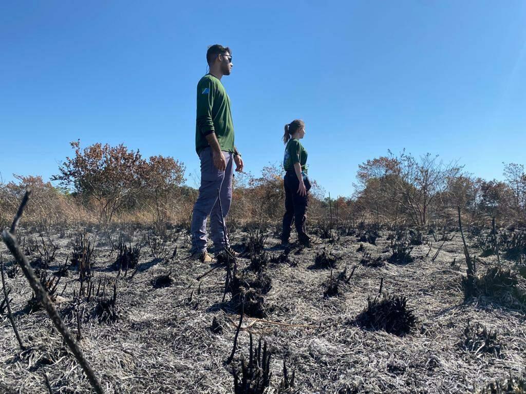 Equipe do GRETAP foi acionada para vistoriar a área e não encontrou carcaça de animais (Foto GRETAP)