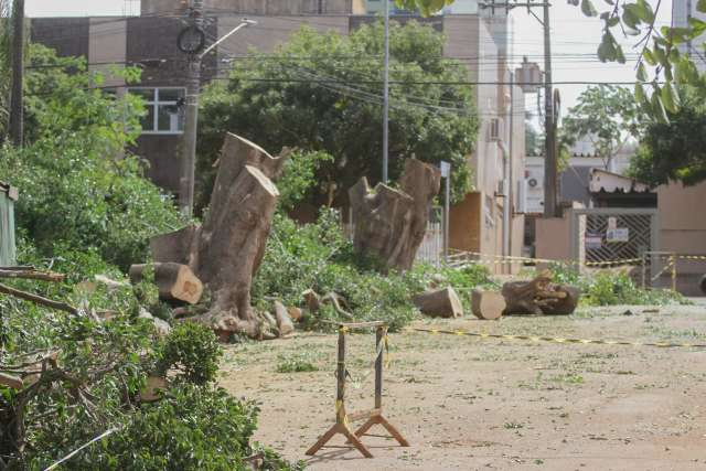 Derrubada de árvores descaracteriza uma das principais praças da Capital