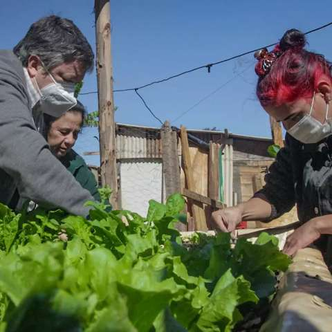 Na favela, horta diminui descarte de plástico e muda cardápio de famílias