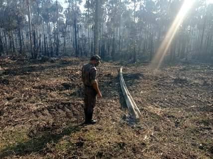 Fazendeiro diz que queda de poste causou incêndio em 821 hectares de vegetação
