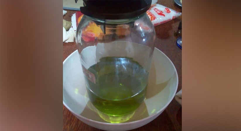 Óleo extraído da cannabis e usado por homem para tratamento de dores (Foto/Reprodução)