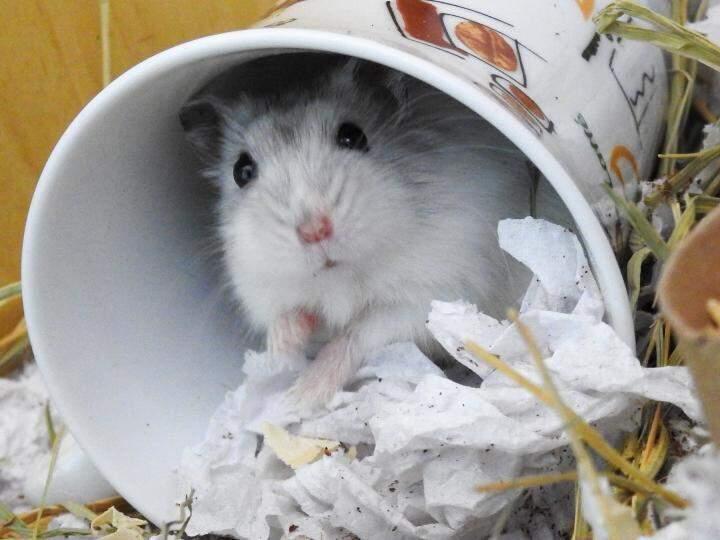 A foto do hamster muito desconfiando dentro do copo também está no concurso. (Foto: Arquivo pessoal)