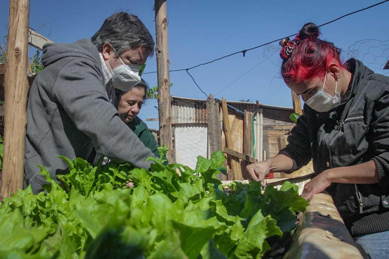 A horta faz parte de um projeto experimental do Cepaer (Centro de Pesquisa e Capacitação da Agraer). (Foto: Marcos Maluf)