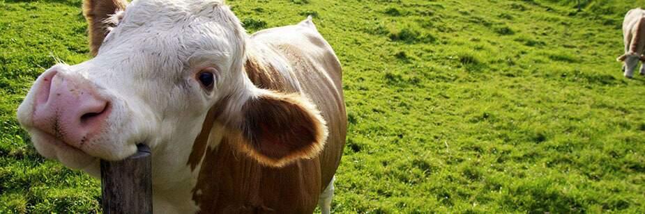 Controle eficiente está no manejo correto das pastagens e dos animais. Foto: Reprodução