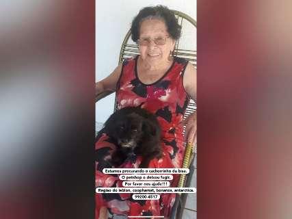 Cãozinho desaparece após fugir de Pet Shop e idosa de 90 anos cai no choro