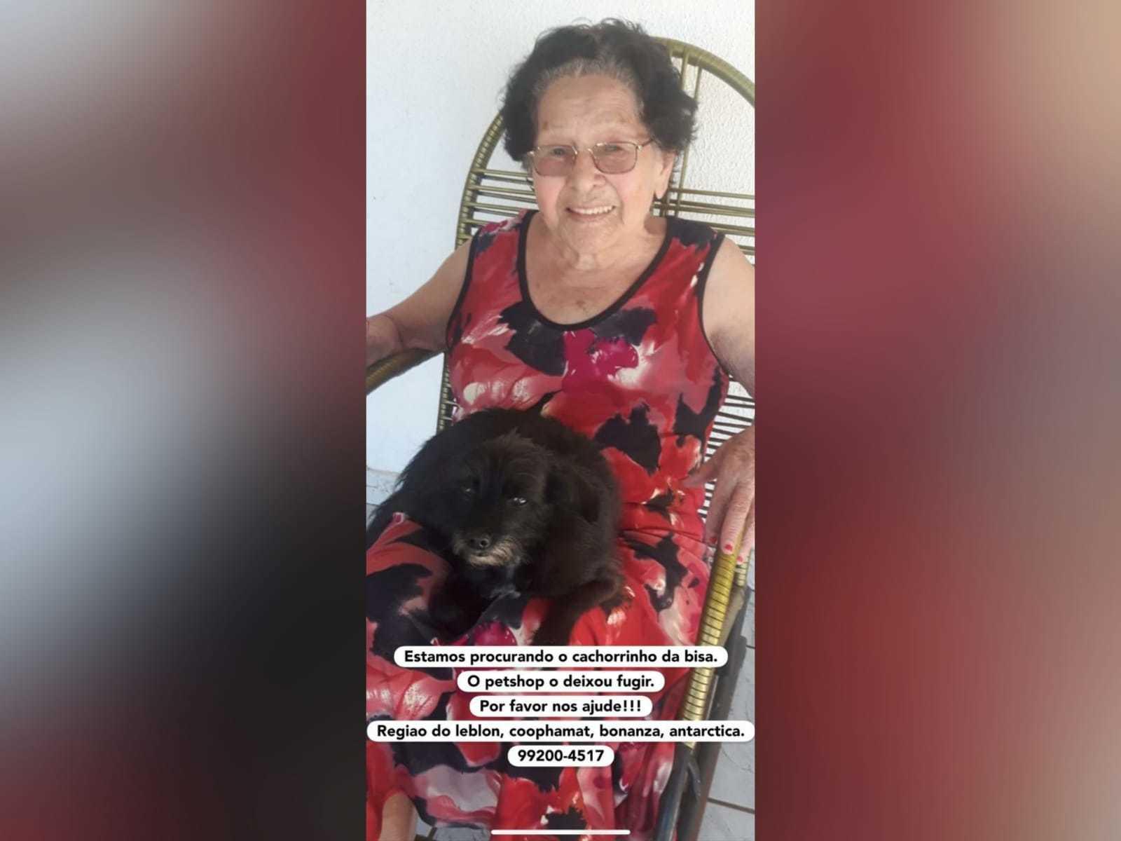 Luxinho segue desaparecido e deixa dona de 90 anos abatida. (Foto:Arquivo Pessoal)